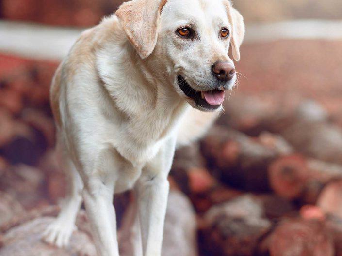 Hundeportrait Zelda