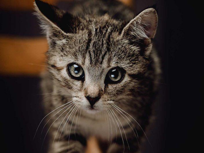 Katzenportrait Hoolaia